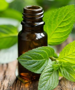 DIY-Peppermint-Essential-Oil-At-Home-Recipe-ft-480x576