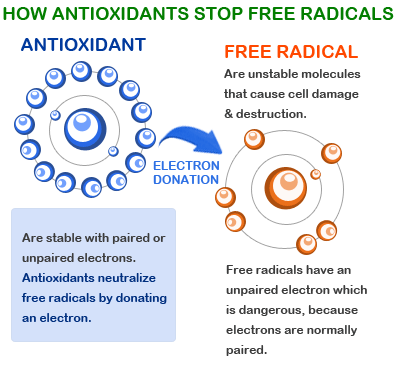 Anti-Oxidants-stop-Free-Radicals